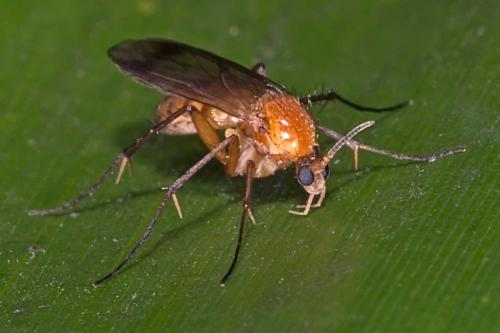 www.galerie-insecte.org/galerie/image/dos133/big/_dss2795.jpg