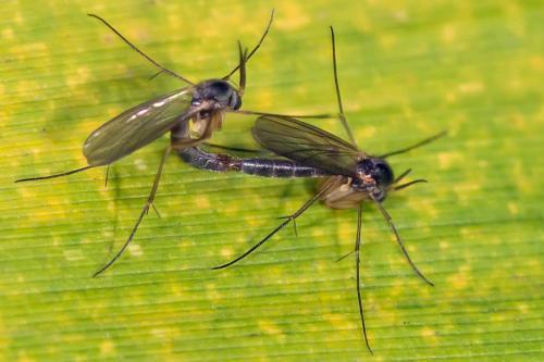 www.galerie-insecte.org/galerie/image/dos133/big/_dss3007.jpg