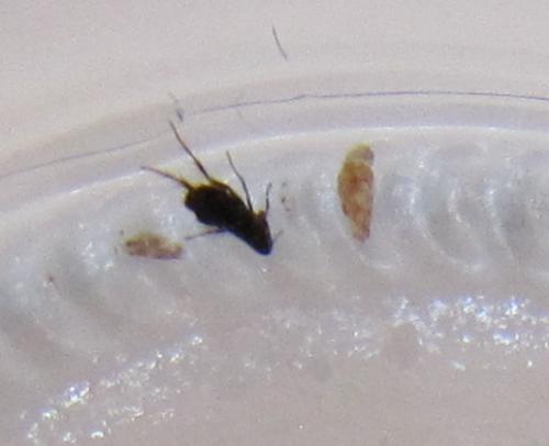 piq res d 39 insectes qui d mangent le monde des insectes. Black Bedroom Furniture Sets. Home Design Ideas