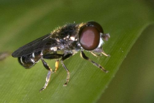 www.galerie-insecte.org/galerie/image/dos164/big/_aaa0672.jpg