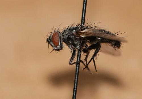 www.galerie-insecte.org/galerie/image/dos199/big/IMG_6268.JPG