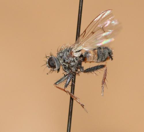 www.galerie-insecte.org/galerie/image/dos199/big/IMG_6295.JPG
