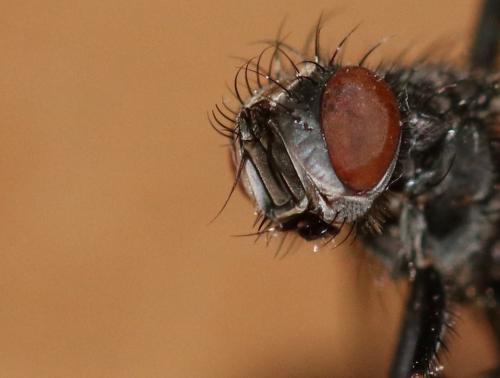 www.galerie-insecte.org/galerie/image/dos199/big/IMG_6373.JPG