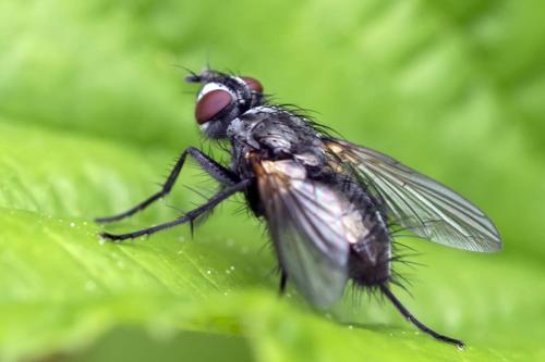 www.galerie-insecte.org/galerie/image/dos199/big/_DSS3711.jpg