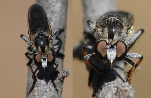 www.galerie-insecte.org/galerie/image/dos207/big/asile2.jpg