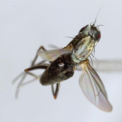 www.galerie-insecte.org/galerie/image/dos215/big/_MG_0947.jpg