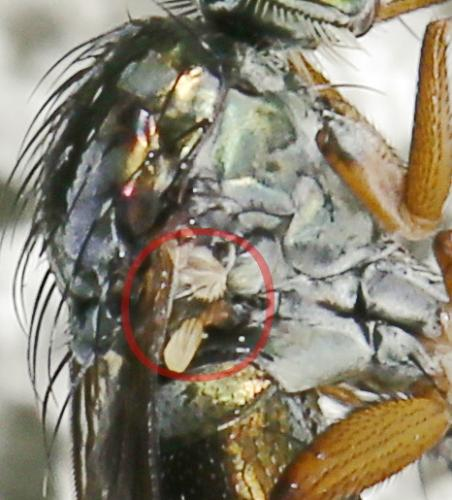 www.galerie-insecte.org/galerie/image/dos219/big/180614_042.jpg