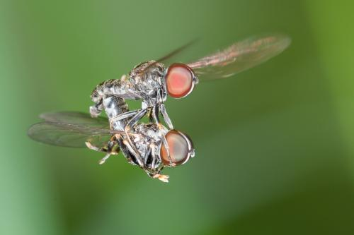 www.galerie-insecte.org/galerie/image/dos219/big/dipk.jpg