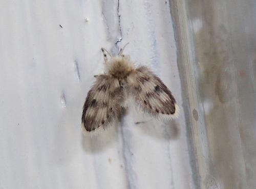 www.galerie-insecte.org/galerie/image/dos222/big/IMG_8164%20copie.JPG