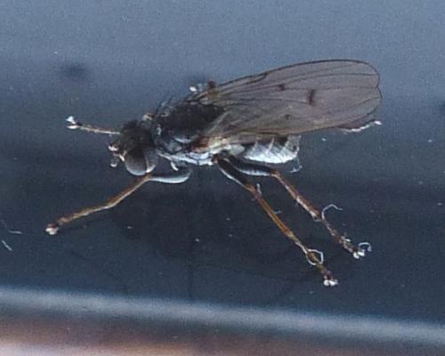 www.galerie-insecte.org/galerie/image/dos222/big/P1380733.JPG