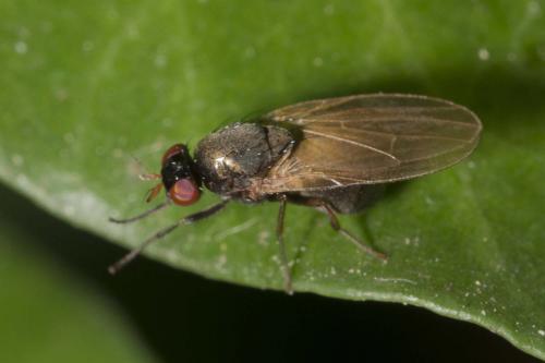 www.galerie-insecte.org/galerie/image/dos225/big/7272.jpg