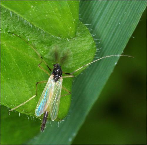 www.galerie-insecte.org/galerie/image/dos228/big/plumeau-irise.jpg