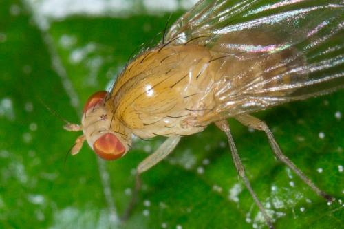 www.galerie-insecte.org/galerie/image/dos234/big/mouche%202.jpg