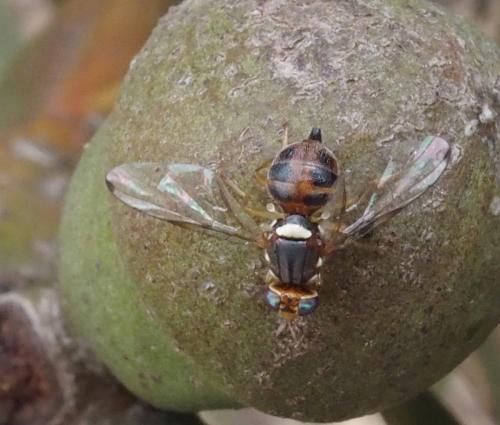 www.galerie-insecte.org/galerie/image/dos241/big/P5012409.JPG