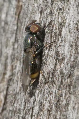 www.galerie-insecte.org/galerie/image/dos241/big/_AA09700.jpg