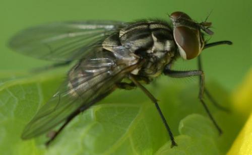 Insectes Dsc00266