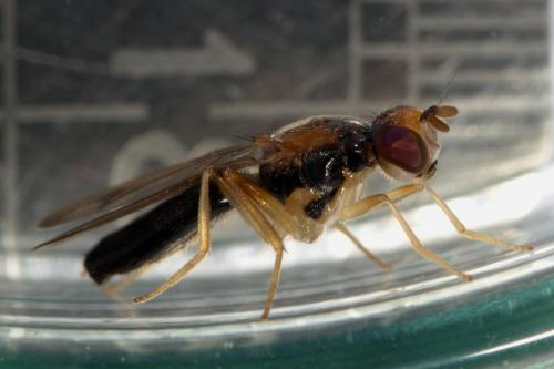 www.galerie-insecte.org/galerie/image/dos257/big/200517_034.jpg