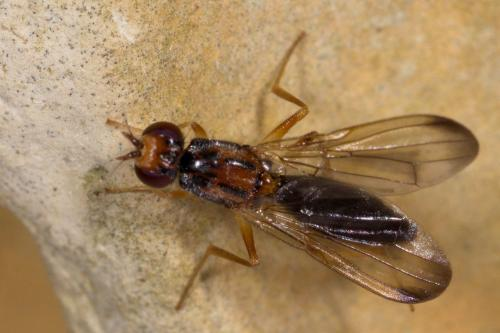 www.galerie-insecte.org/galerie/image/dos257/big/200517_049.jpg