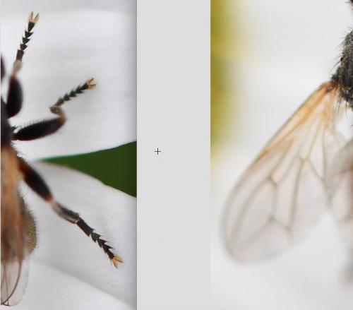 www.galerie-insecte.org/galerie/image/dos260/big/T.atra%205mm.jpg