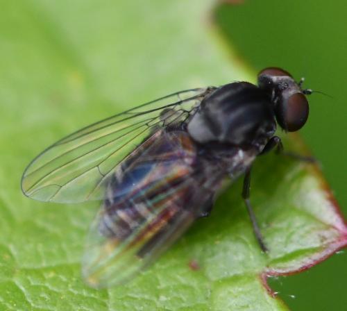 www.galerie-insecte.org/galerie/image/dos266/big/%204-5mm%202408.jpg