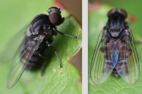 www.galerie-insecte.org/galerie/image/dos266/big/2%202408.jpg