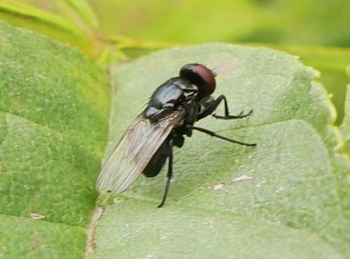 www.galerie-insecte.org/galerie/image/dos268/big/P1170589.JPG