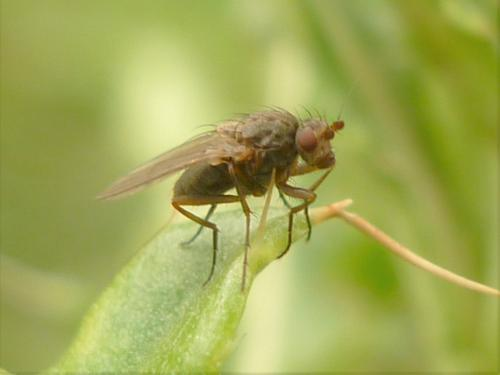 www.galerie-insecte.org/galerie/image/dos276/big/P1090866%205.JPG