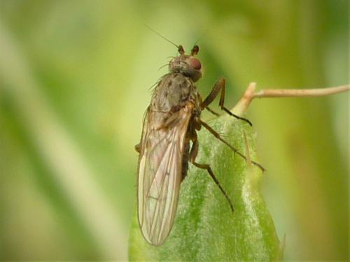 www.galerie-insecte.org/galerie/image/dos276/big/P1090871%202.JPG
