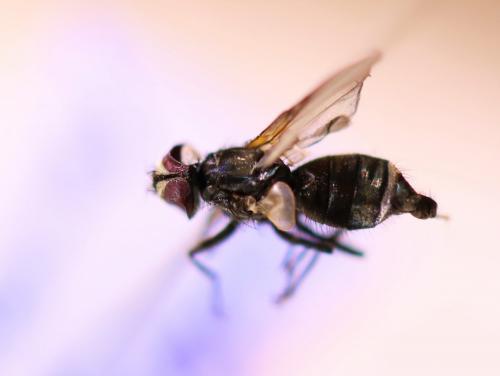 www.galerie-insecte.org/galerie/image/dos279/big/Chalonne%20sur%20loire%20octobre%202020%202.JPG