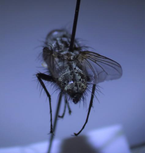 www.galerie-insecte.org/galerie/image/dos280/big/La%20roche%20blanche%20juin%202020.JPG