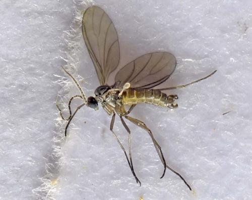 www.galerie-insecte.org/galerie/image/dos281/big/AAB4140.jpg