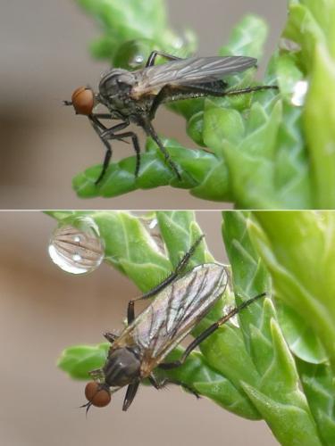www.galerie-insecte.org/galerie/image/dos284/big/P115023941r1k.jpg