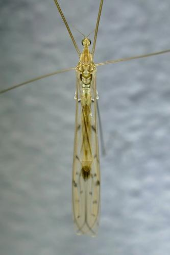 www.galerie-insecte.org/galerie/image/dos286/big/P1560267.JPG