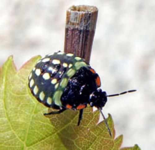 Acheter coccinelle insecte collection design inspiration pour le jardin et son - Acheter des coccinelles ...