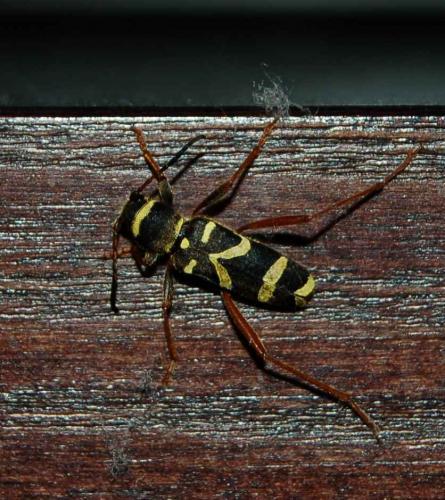 insectes noirs volants maison ventana blog. Black Bedroom Furniture Sets. Home Design Ideas